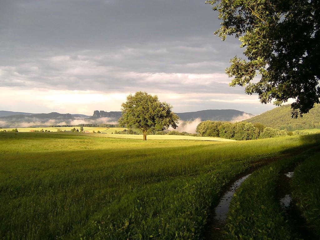Schrammsteine_mit_Nebel_nach_einem_Gewitter_(Sächsische_Schweiz)
