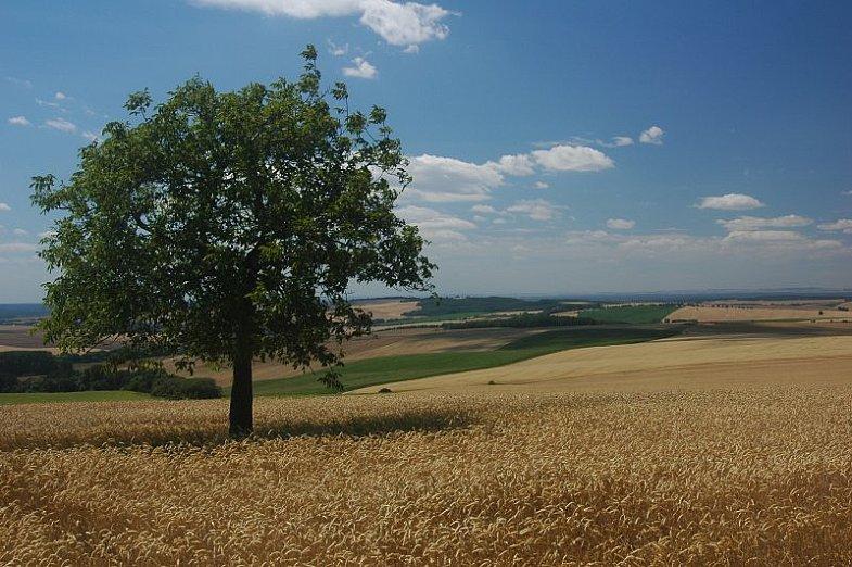 Chvojnica_hills_near_Unin