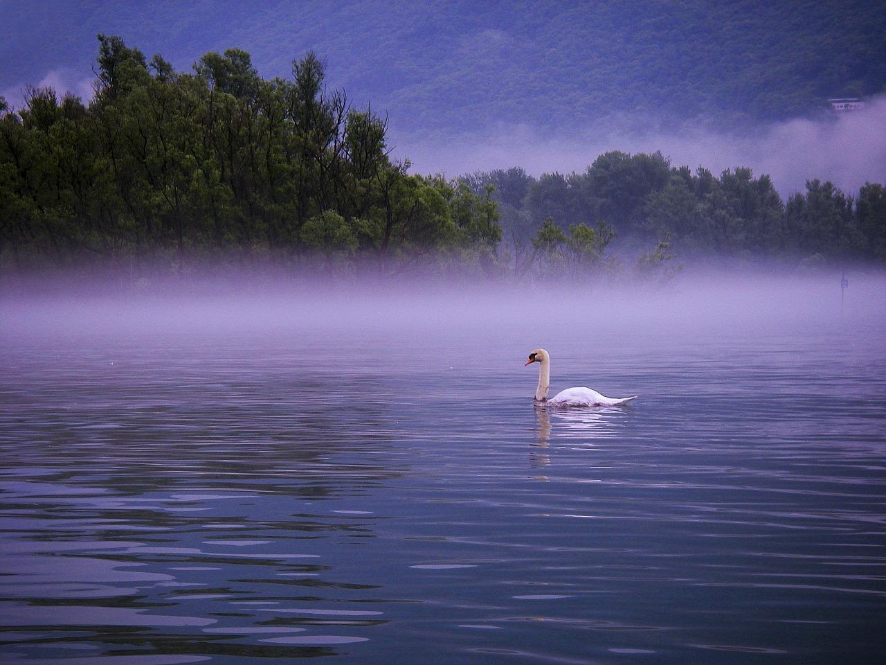 swan-752449_1280