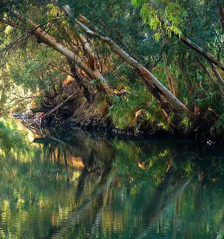 451px-Jordan_River_Bushy