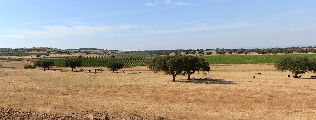 1280px-Alentejo_September_2013-1