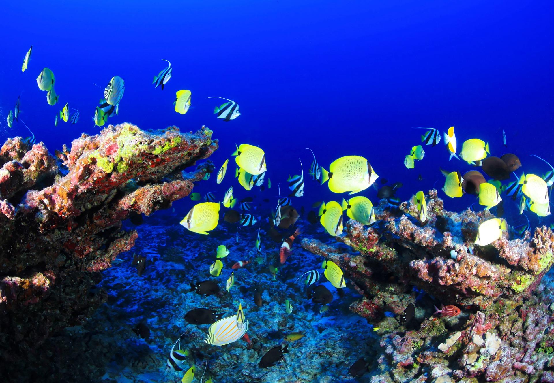 coral-reef-954057_1920