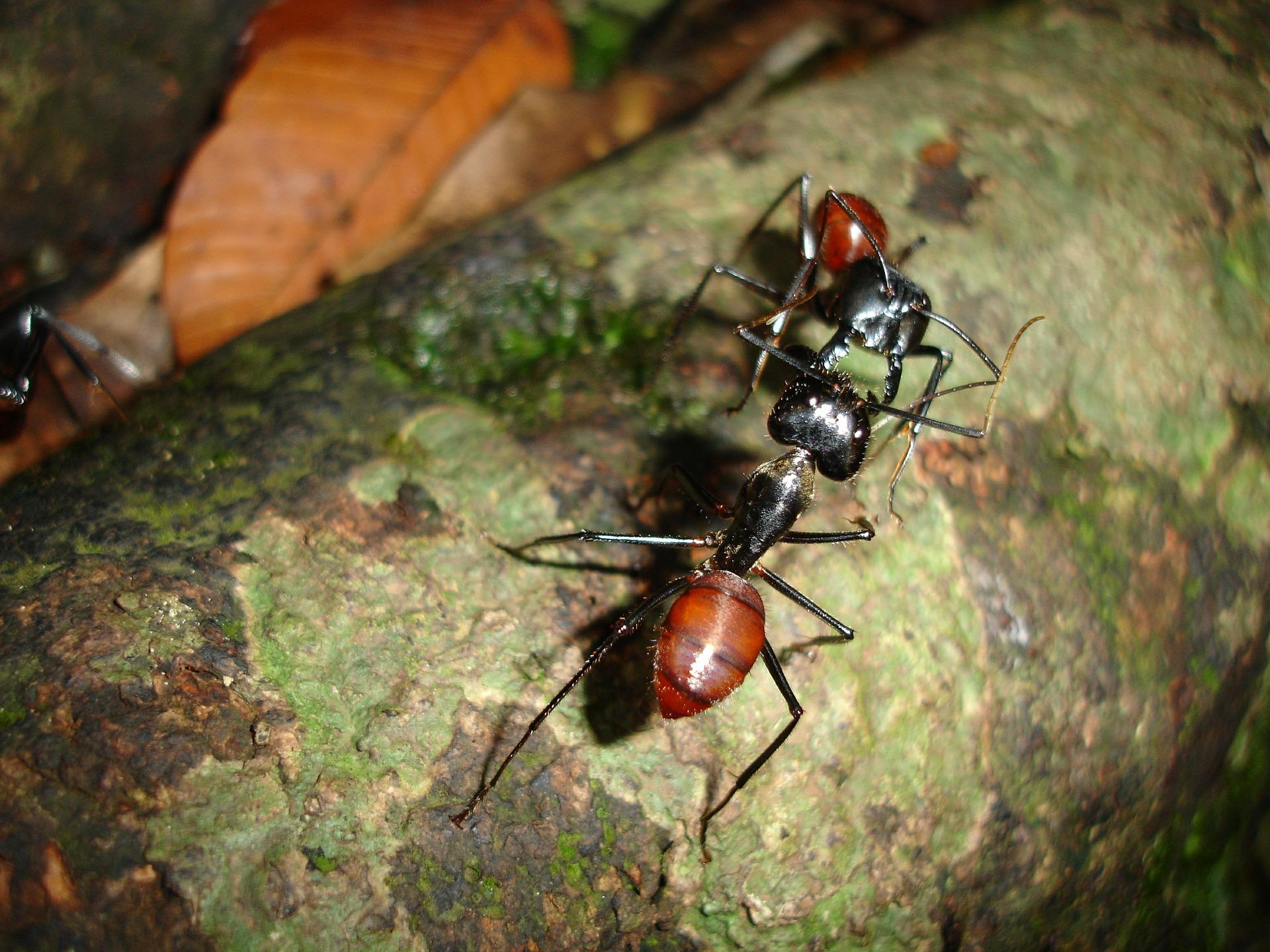 ants-469150_1920