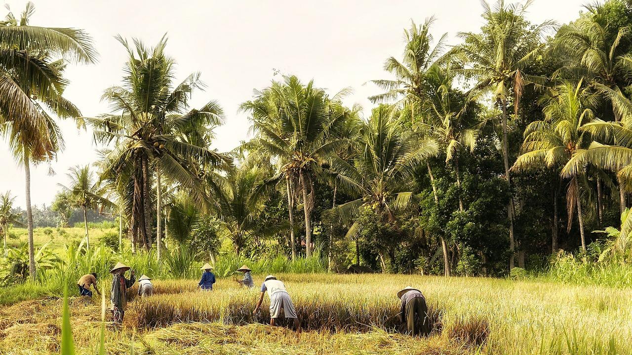 indonesia-570647_1280