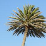 palm-1260181_1920