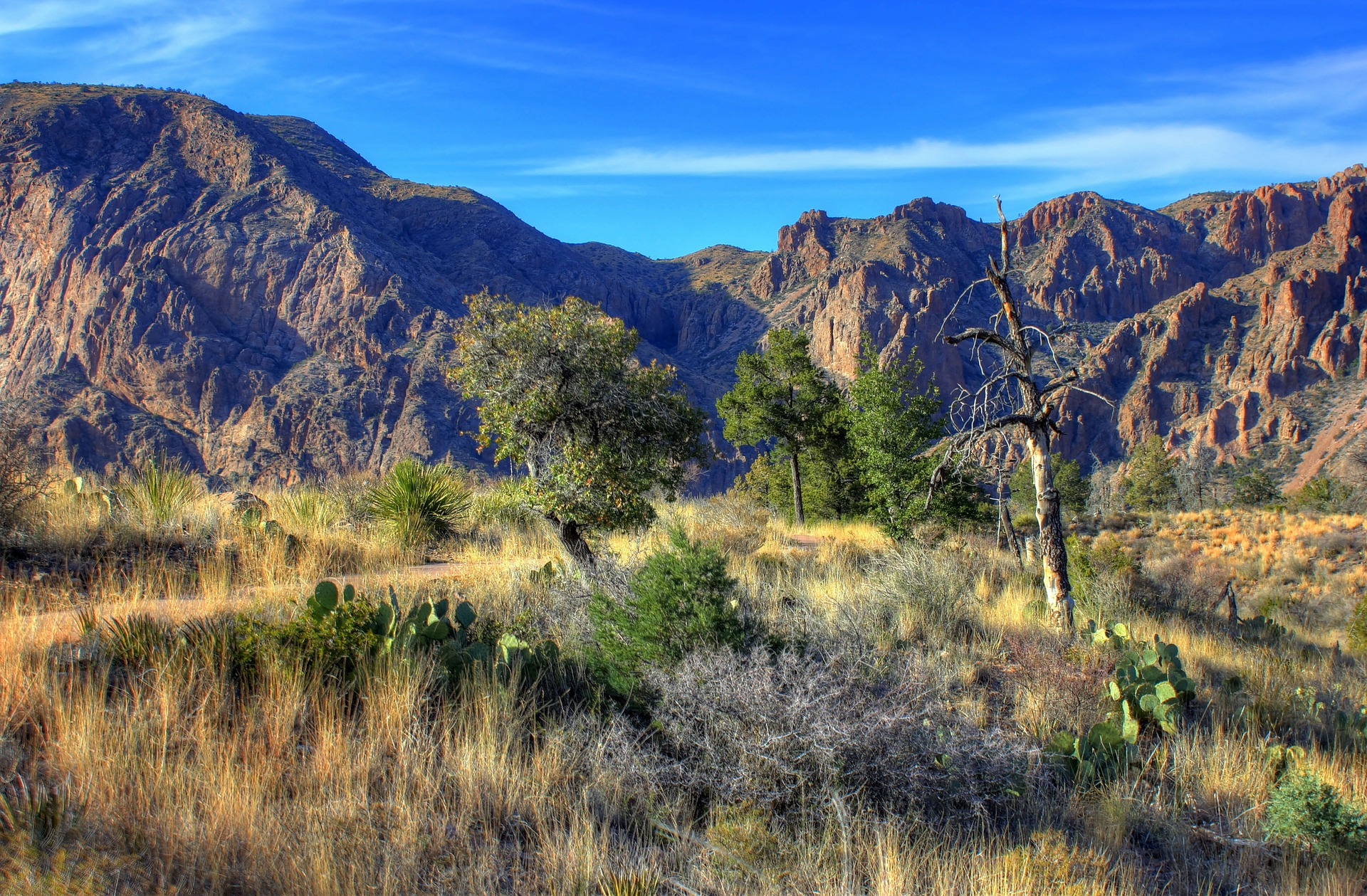 big-bend-national-park-347398_1920