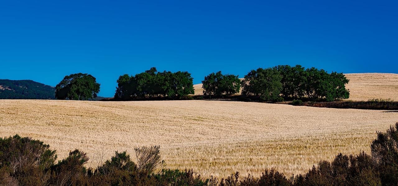 california-1587276_1280