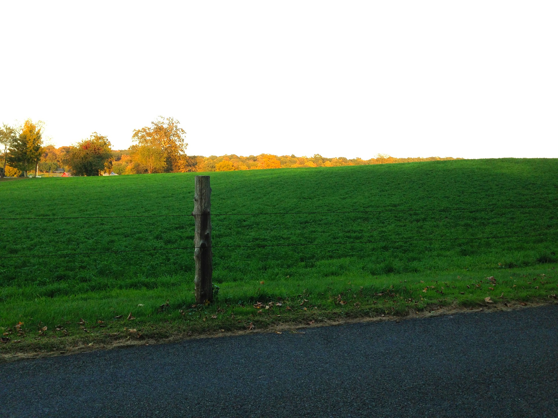 meadow-952635_1920