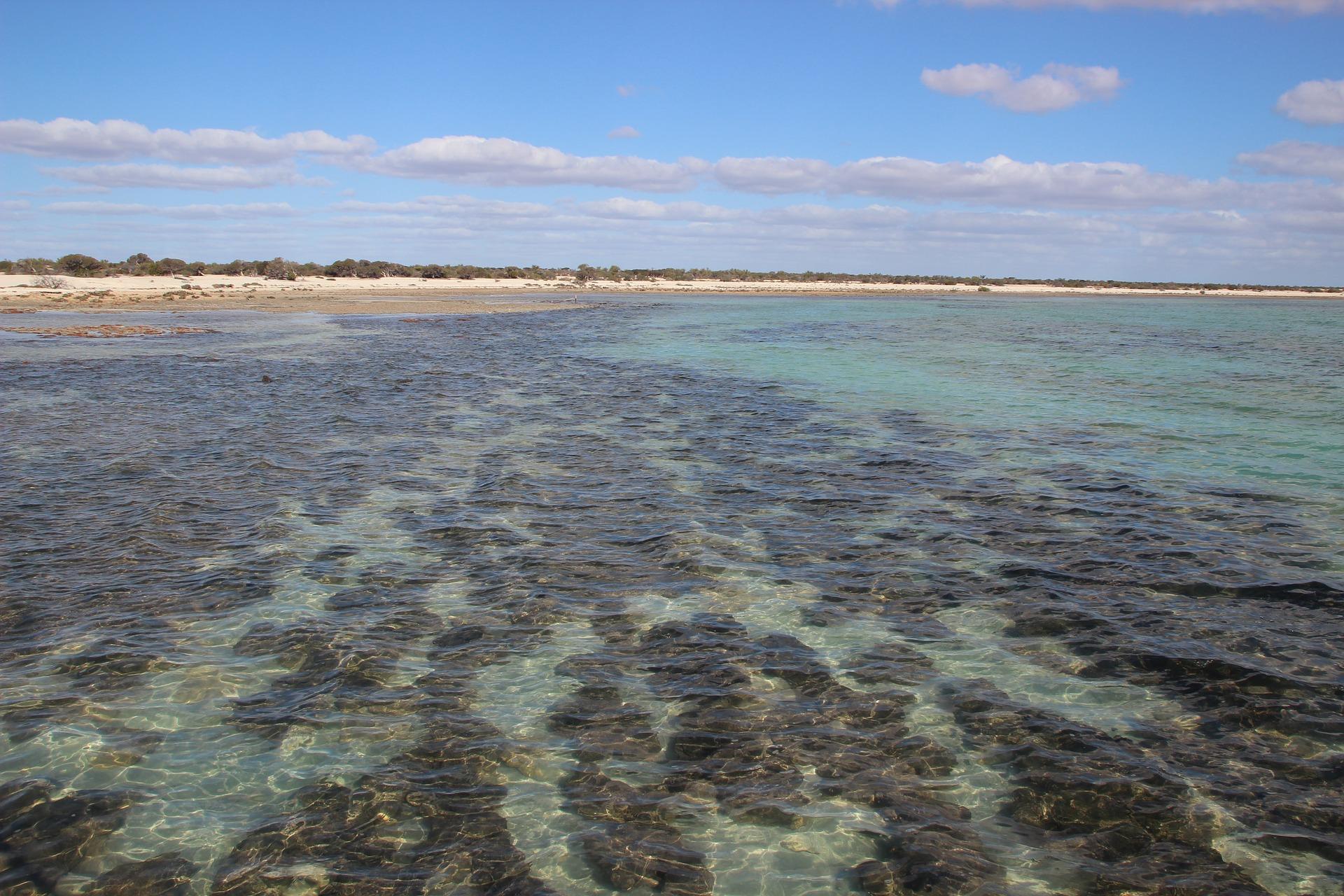 stromatolites-820842_1920