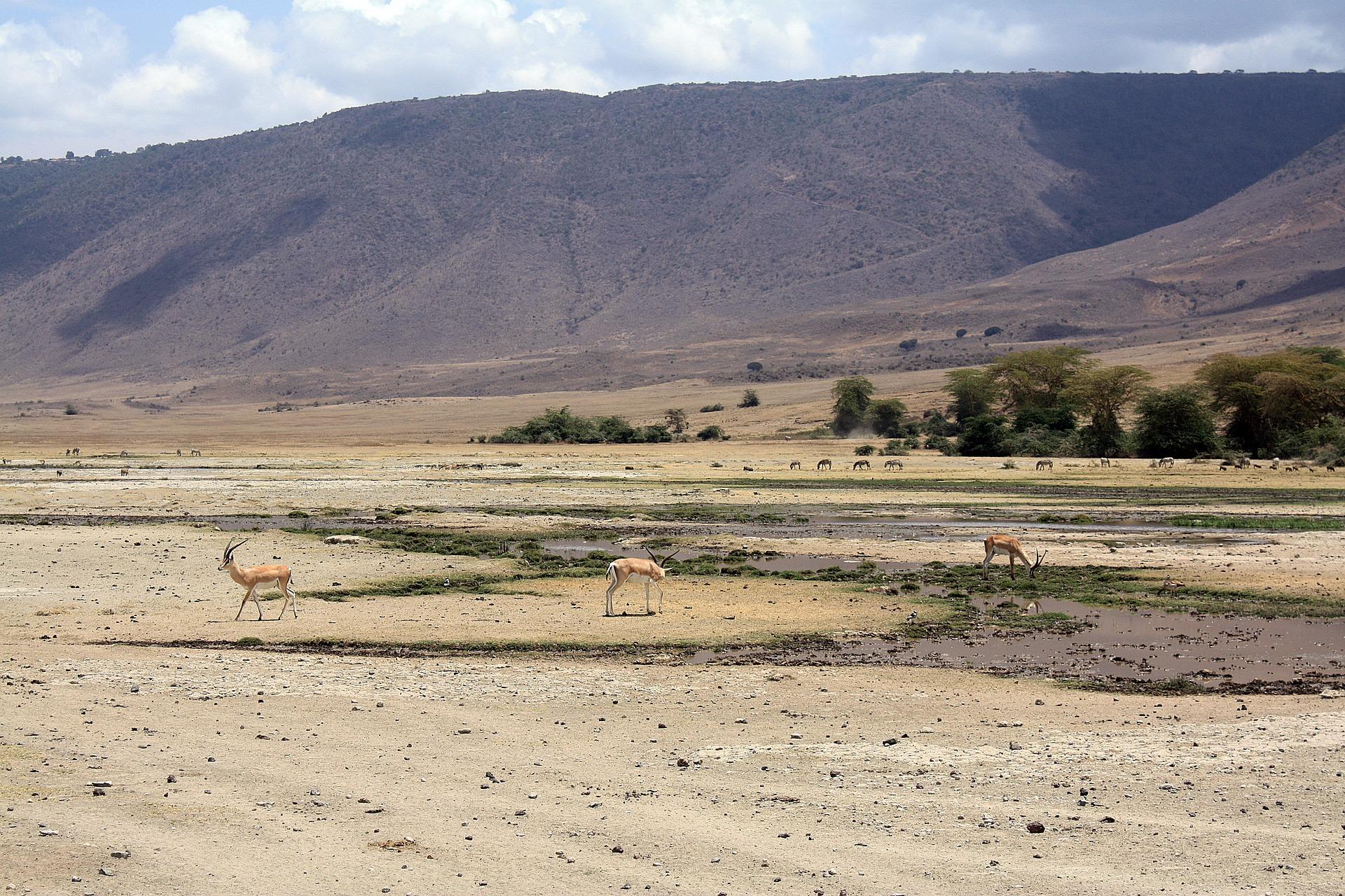 antelope-1705206_1920