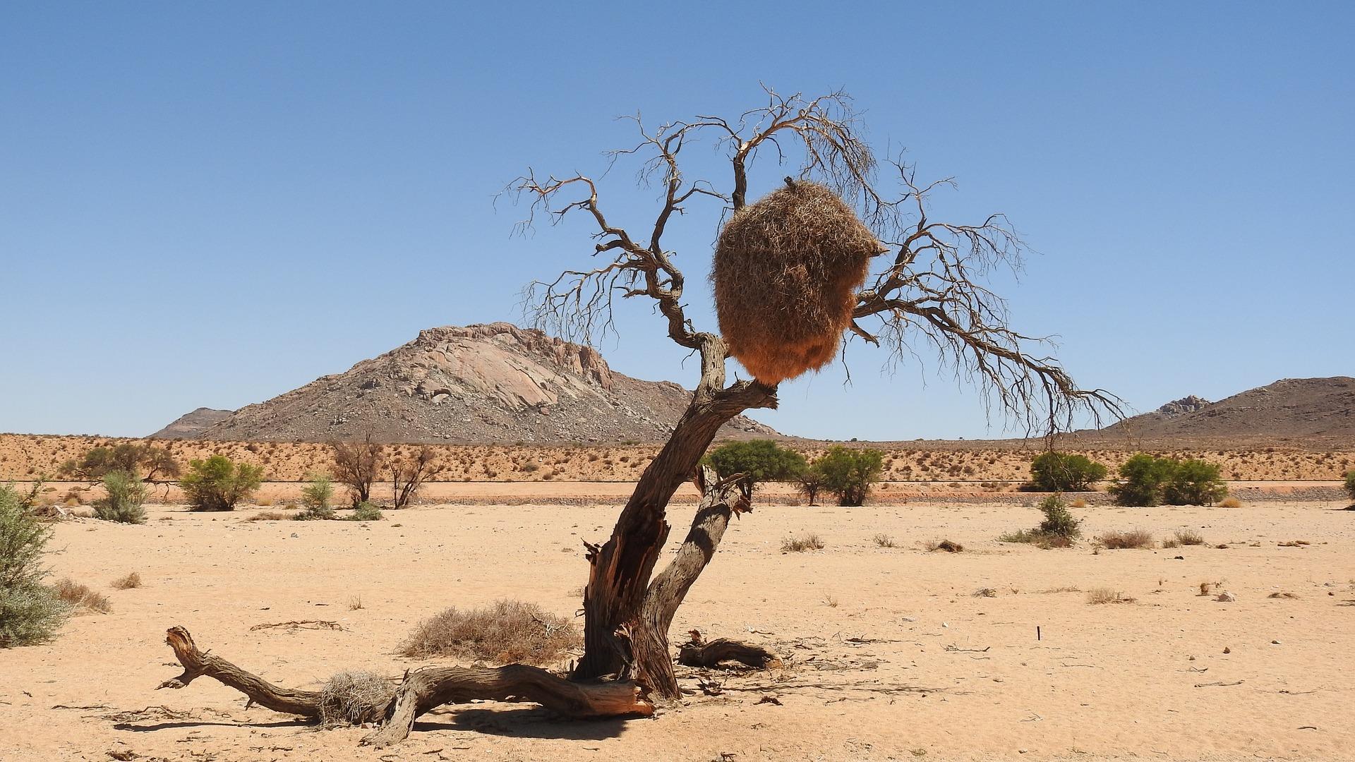 desert-1913128_1920