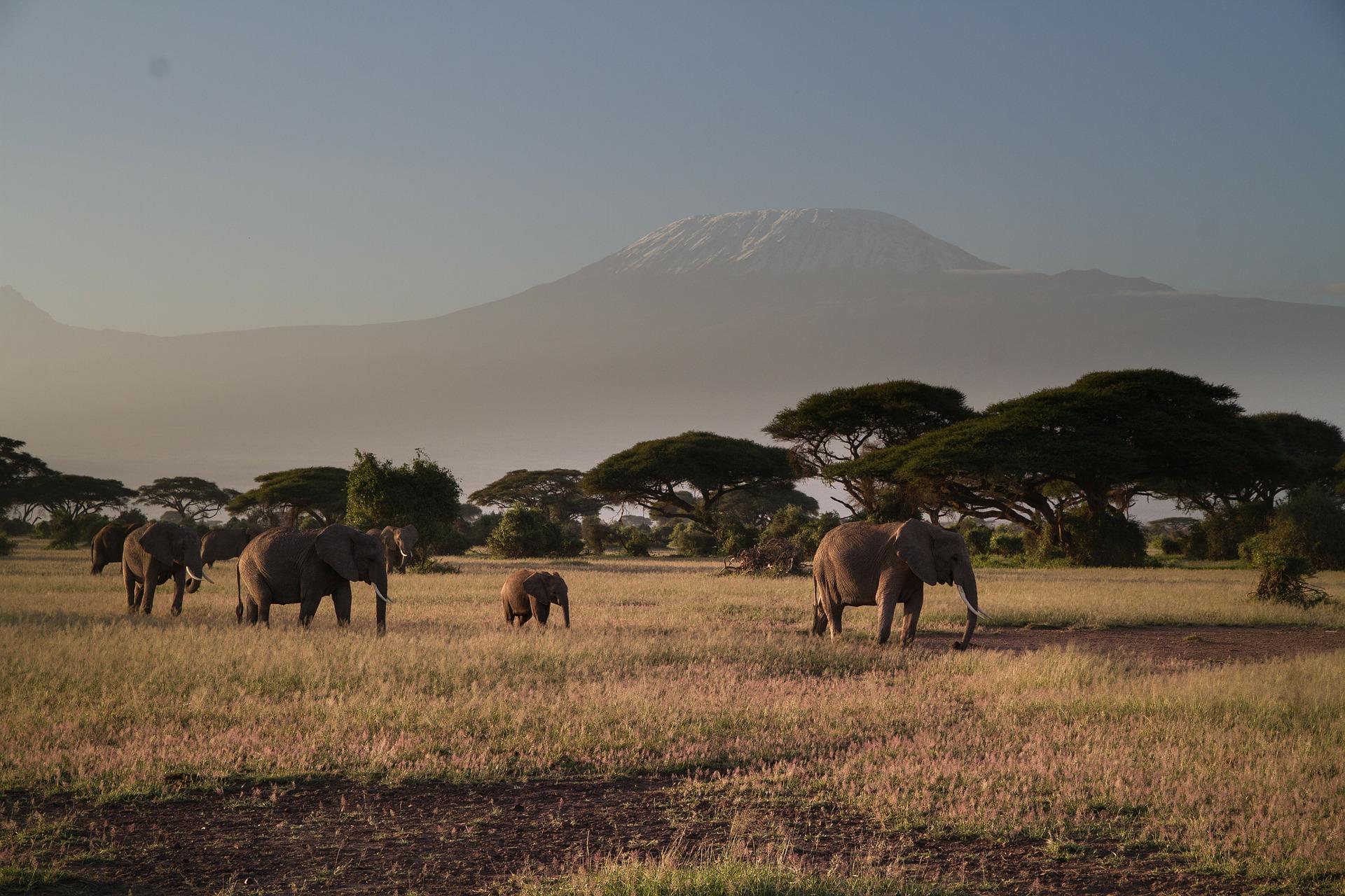 elephant-279992_1920