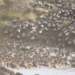 great-migration-1021460_1920