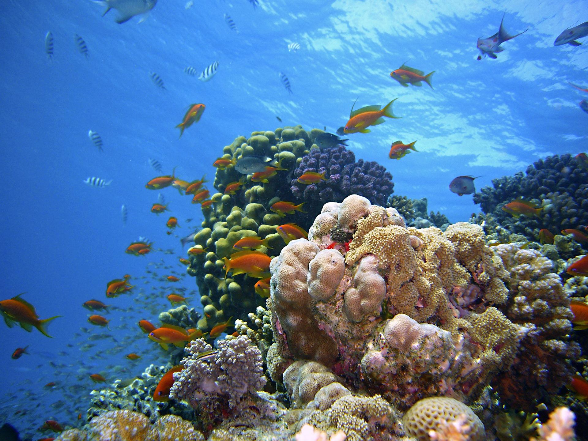 underwater-1656618_1920