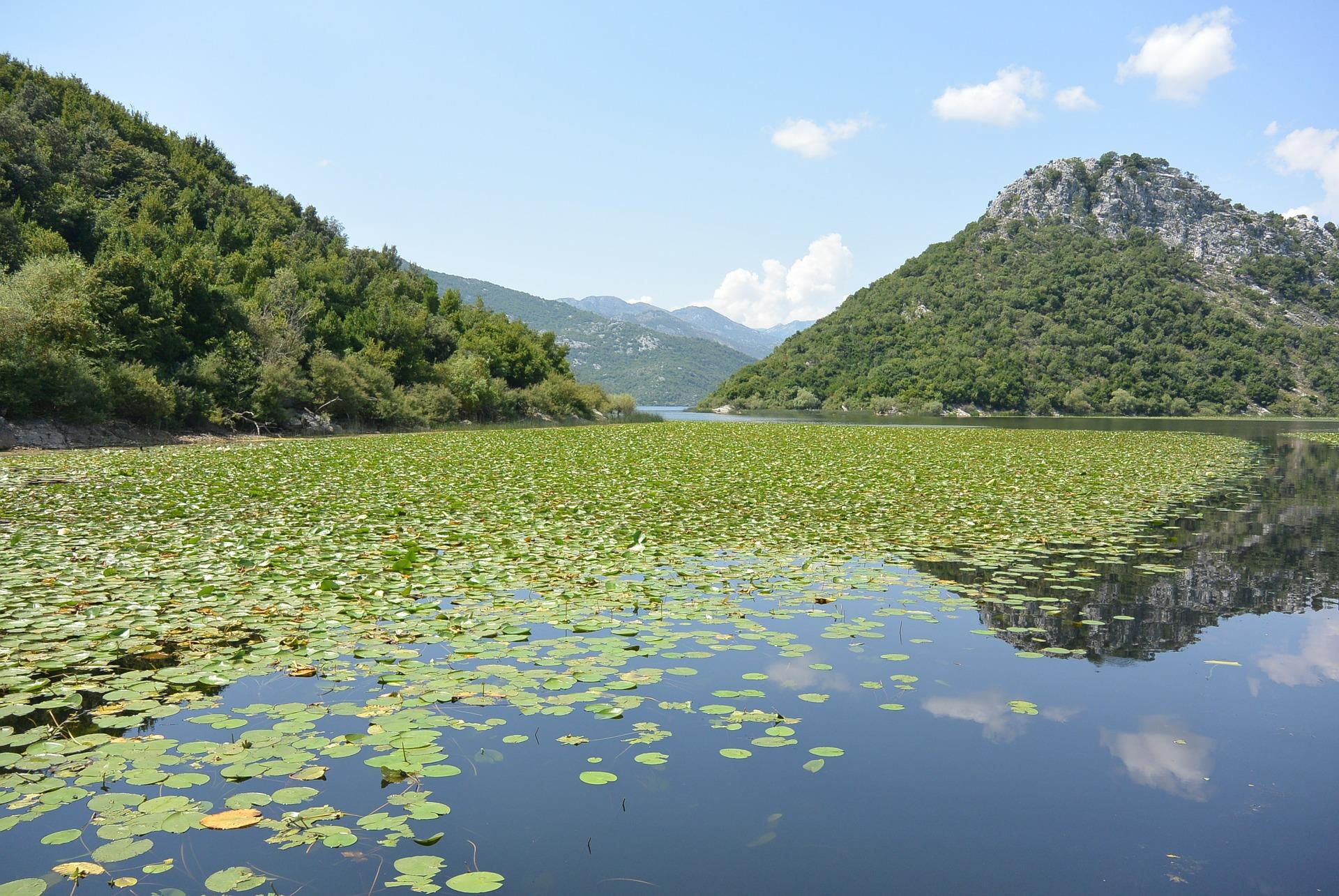 skadar-lake-469973_1920