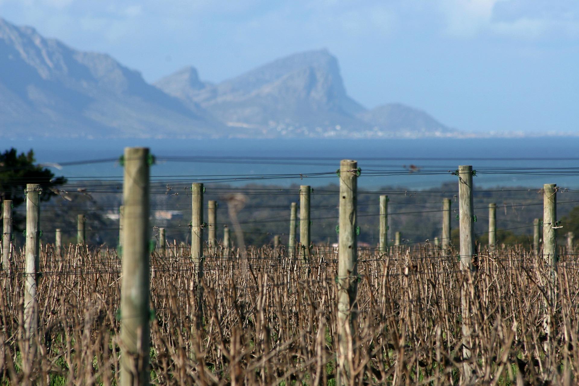 vineyards-227780_1920