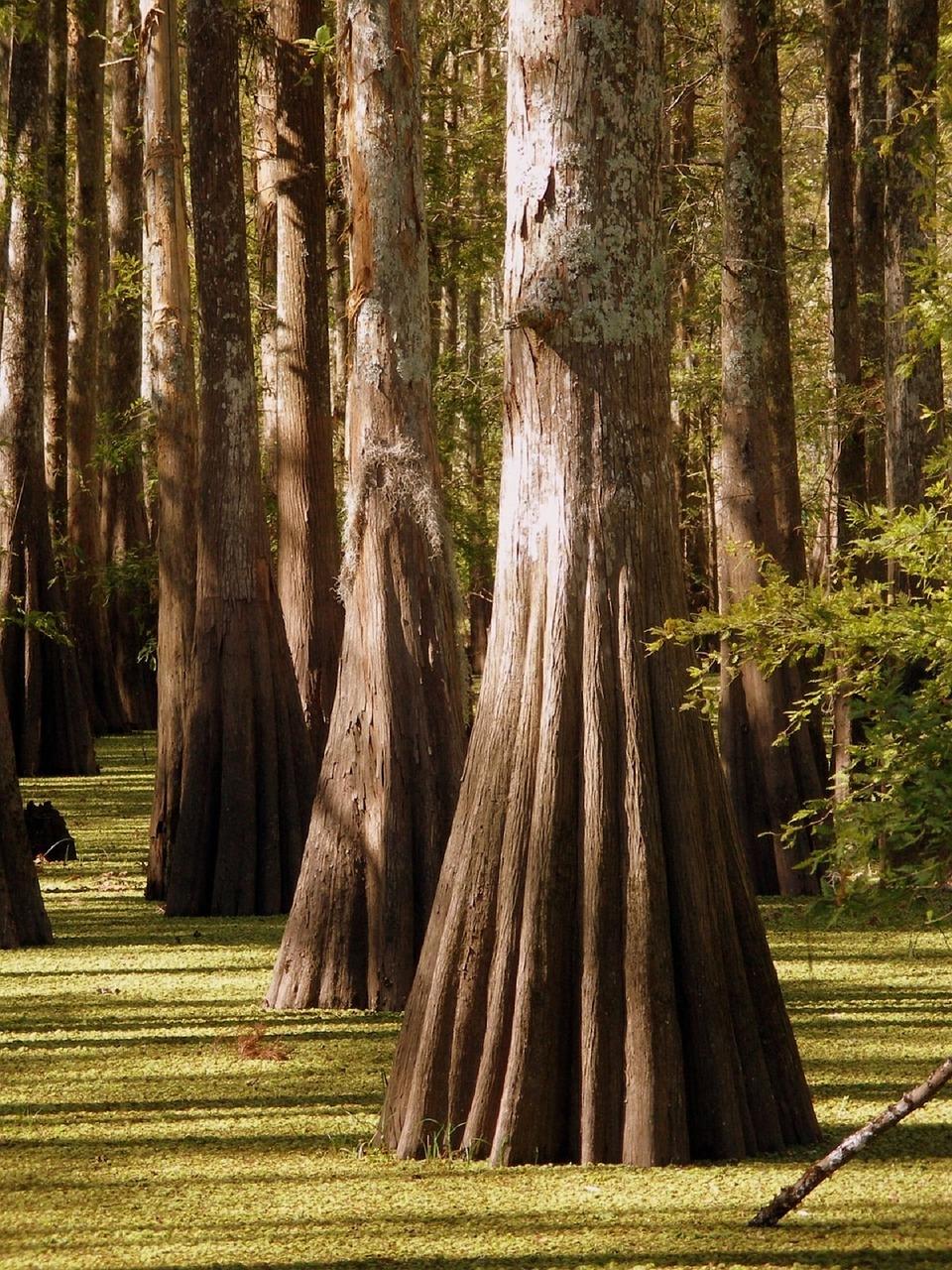 trees-852283_1280