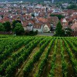 Weinfelder mit Blick auf die Stadt
