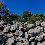 Steinmauern mit Olivenbäume