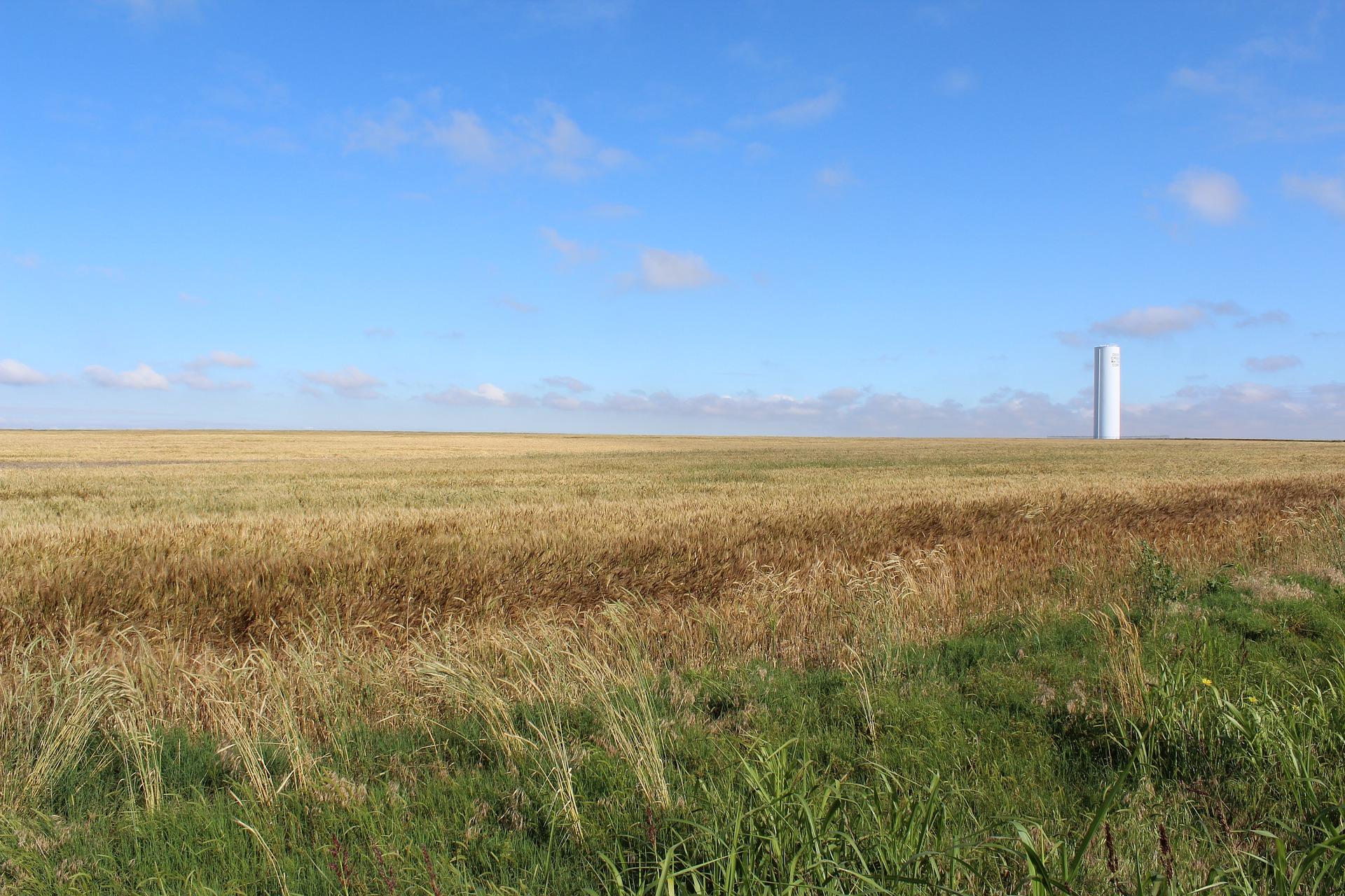 wheat-2488215_1920