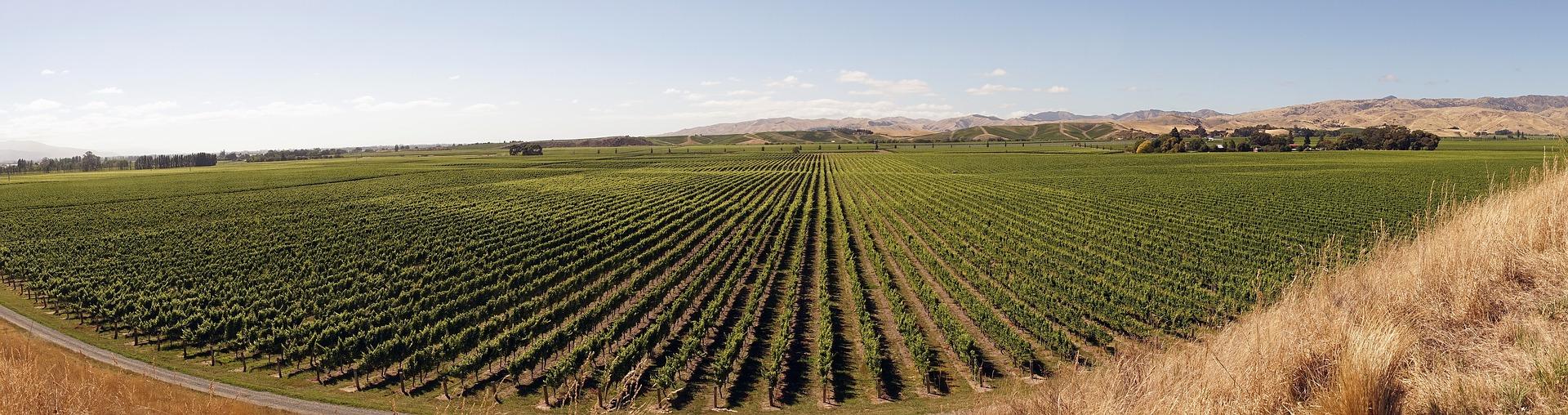winegrowing-2151457_1920
