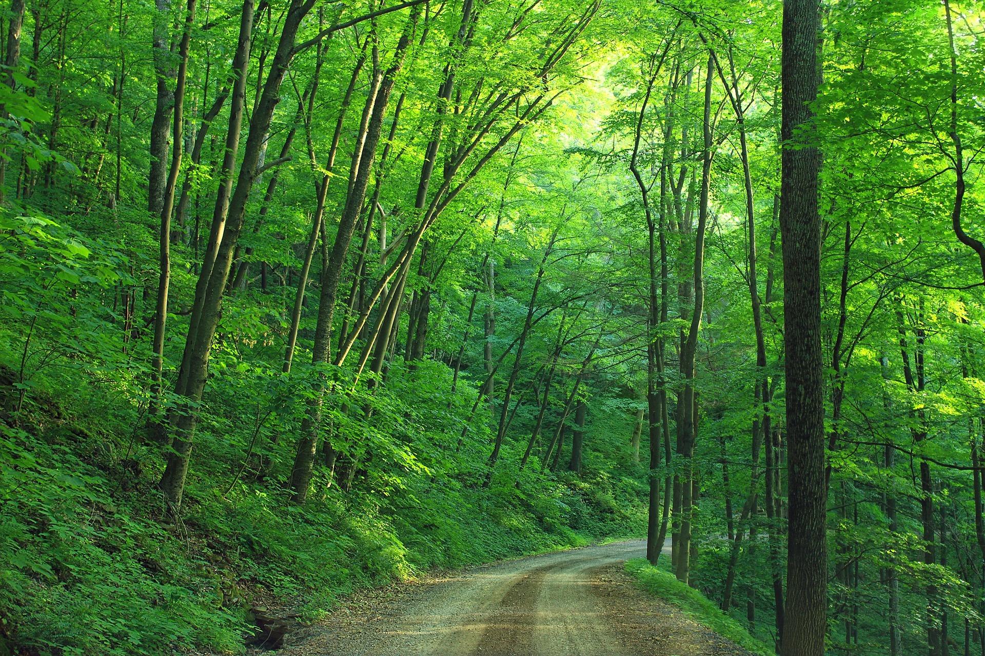 woods-1600782_1920