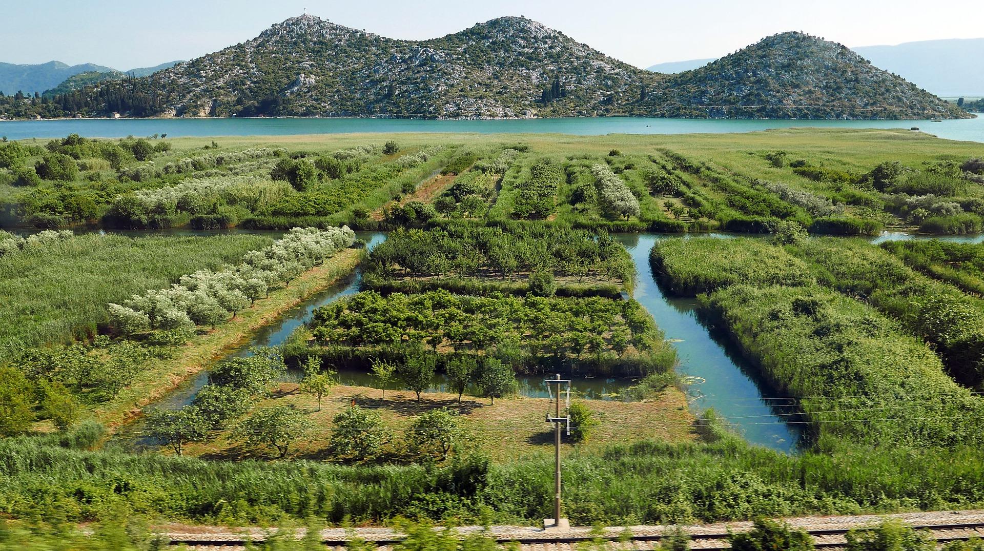 wichtigster mediterrane bäume